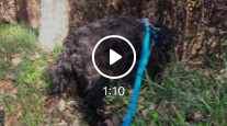 Screen Shot 2020-03-28 at 12.53.45 PM.png